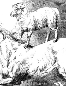"Detail: ""Mad Arabian"" and Lamb, by Harrison Weir"