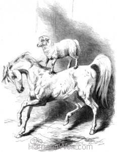 1867 Mad Arabian and Lamb, by Harrison Weir