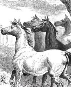 Detail: The Music-Loving Horses, Harrison Weir