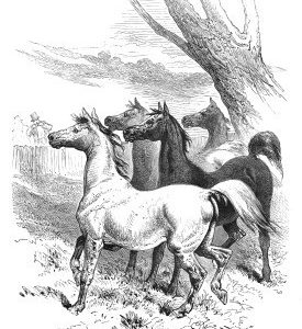1867 The Music-Loving Horses, Harrison Weir