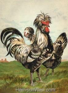 Detail: 1867 Houdans by Harrison Weir