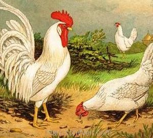 1867 White Leghorns by Harrison Weir