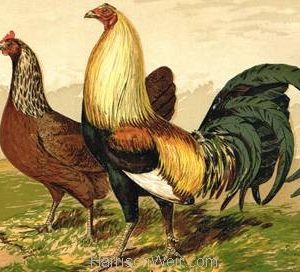 1867 Duck Winged Game by Harrison Weir