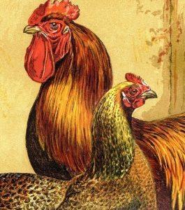 Poultry Print Portrait Format