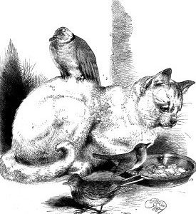1867 Cat And Her Companions by Harrison Weir