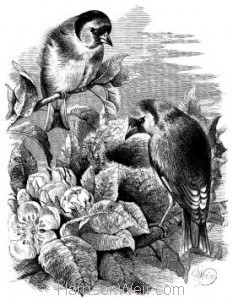 1868 Goldfinches and Nest by Harrison Weir