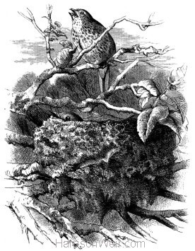 1868 Missel-Thrushes and Nest by Harrison Weir