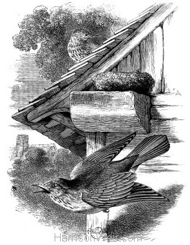1868 Spotted Fly-Catchers and Nest