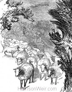 Detail: The wisest way with the Sheep, by Harrison Weir