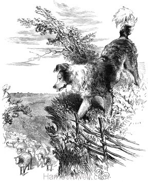 1868 The wisest way with the Sheep, by Harrison Weir