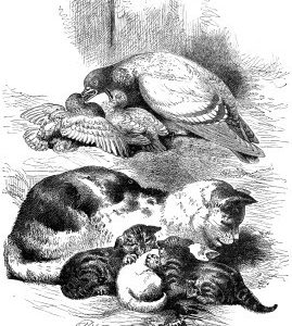 1868 Cat and Pigeon by Harrison Weir