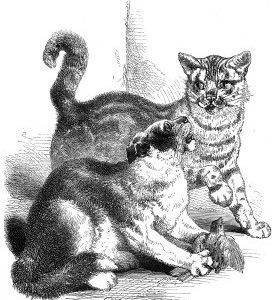 1868 The Two Cats and the Sparrow, by Harrison Weir