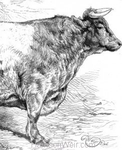 Detail: 1869 Smithfield Prize Cattle by Harrison Weir