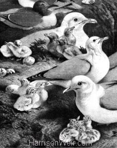 Detail: 1869 The Flamborough Pilots by Harrison Weir