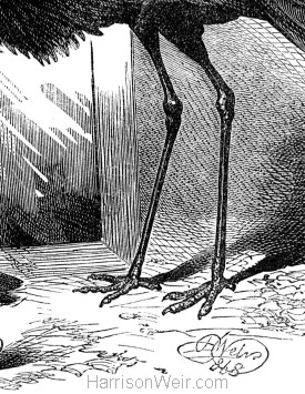 Detail: The Disconsolate Crane, by Harrison Weir