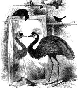 1868 The Disconsolate Crane by Harrison Weir