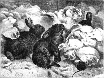 1869 Winter Gardeners by Harrison Weir