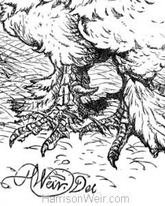 Detail: Artist's signature, Harrison Weir