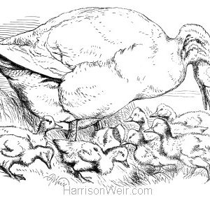 1870 Goose and Goslings by Harrison Weir