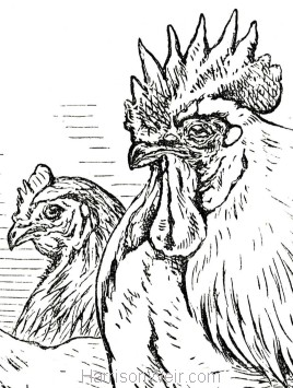 Vere Foster Copy Book O2 (Poultry)