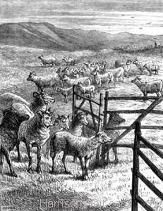 1870 Come the Bleating Lambs by Harrison Weir
