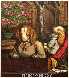 The Dogs Dinner Party