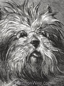 Detail: 1870 The Skye Terrier by Harrison Weir
