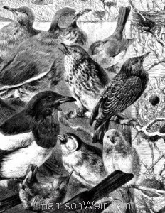 Detail 2: The Pleading of the Birds by Harrison Weir
