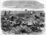 1871 Among The Prairie Hens, by Harrison Weir