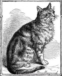 English Cat