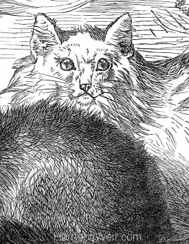 1871 (July) Crystal Palace Cat Show Prize Cats, by Harrison Weir