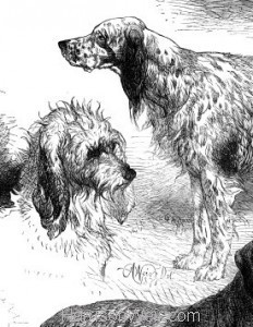 Detail: 1871 Prize Poultry & Dogs at the Birmingham Show by Harrison Weir