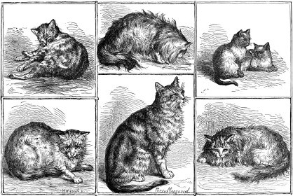 1871 Prize Cats by Percy MacQuoid