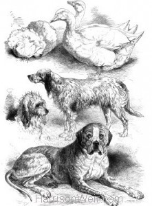 1871 Prize Poultry & Dogs at the Birmingham Show by Harrison Weir