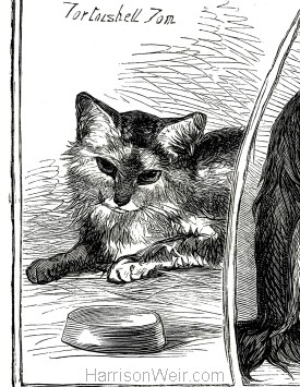 1871 (Dec) Crystal Palace Cat Show Prize Cats