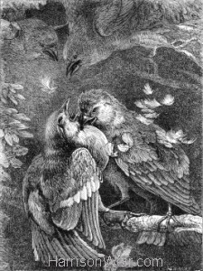 1871 Fight between a Chaffinch and a Sparrow by H Weir