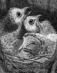 Detail: A Nest of Young Owls by Harrison Weir