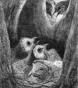 1871 The Nest of Young Owls, by Harrison Weir