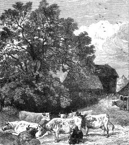1871 Milking the Cows, by Harrison Weir