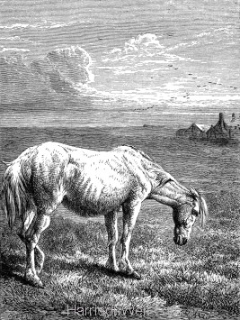 1871 - The Old Horse, by Harrison Weir