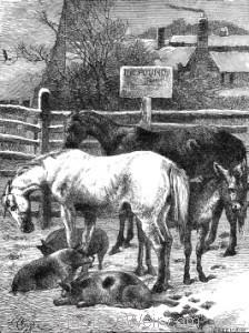 1871 Animals in the Pound, by Harrison Weir