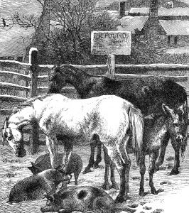 1871 Animals in the Pound, by Harrison Weir