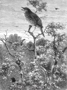 1871 The Concert of Birds by Harrison Weir