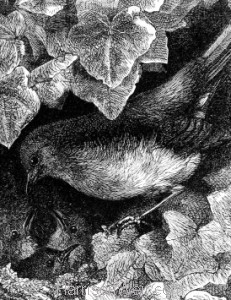 Detail: Robin lectured by his Father, by Harrison Weir