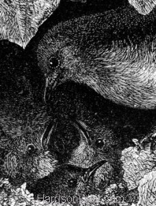 Detail: Robin, lectured by his Father, by Harrison Weir