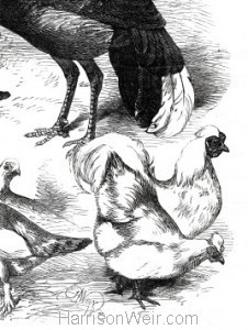 Detail: 1872 Game Birds and Bantams at the Crystal Palace Show by Harrison Weir