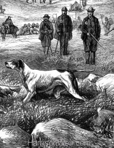 1873 Pointer & Setter Grouse Trials, by Harrison Weir
