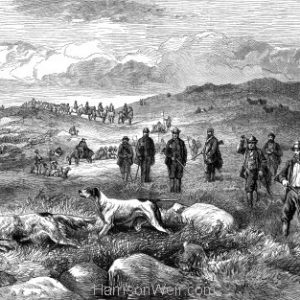 1873 Pointer & Setter Grouse Trials by Harrison Weir