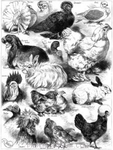 1873 Poultry, Pigeon & Rabbit Show at the Crystal Palace by Harrison Weir