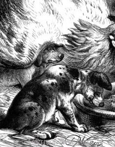 Detail: Hen feeding Pups, by Harrison Weir
